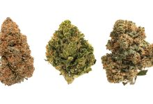 Photo of CBD Strain: Things You Should Know Before Selecting One