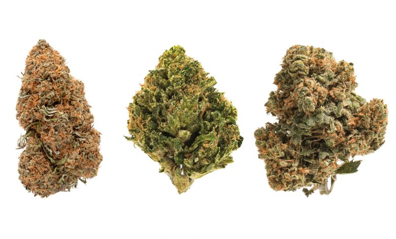 CBD Strain: Things You Should Know Before Selecting One
