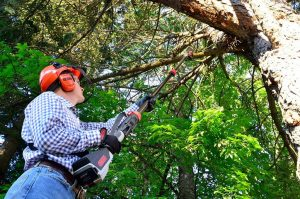 Four Reasons Why People Like Oregon Cordless Pole Saw